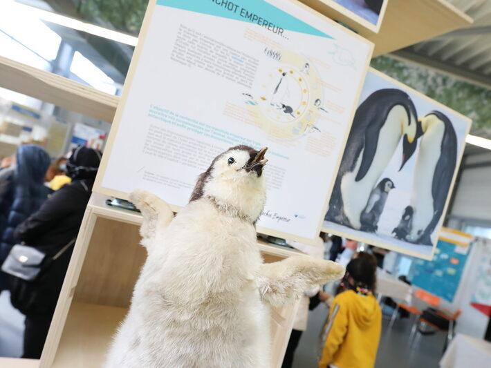 """Exposition """"Animaux polaires : une vie de scientifique"""" IPEV • Le campus fête la science ! • Campus de Cronenbourg, Strasbourg • Fête de la Science 2021 © Nicolas Busser, CNRS"""